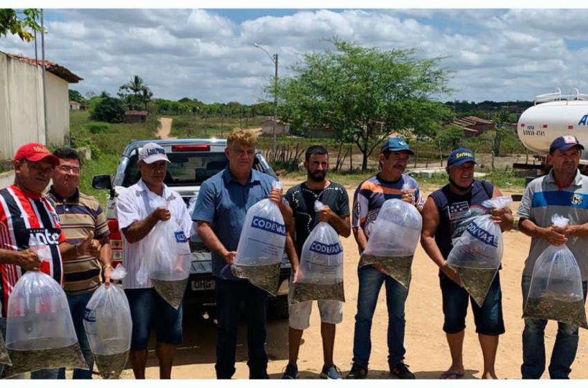 Prefeitura entrega 20 mil alevinos em parceria com a CODEVASF